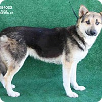 Adopt A Pet :: A084023 - Hanford, CA
