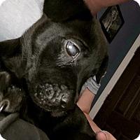 Adopt A Pet :: Kano - Miami, FL