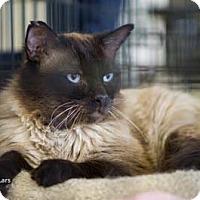 Adopt A Pet :: Lars - Merrifield, VA