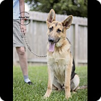 Adopt A Pet :: Kermit - Houston, TX