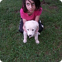 Adopt A Pet :: Stella (ETAA) - Allentown, PA