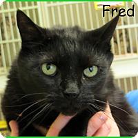 Adopt A Pet :: Fred aka Fang - Warren, PA