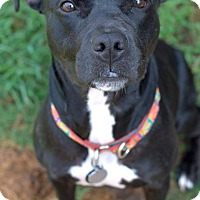 Adopt A Pet :: Heartly - College Station, TX
