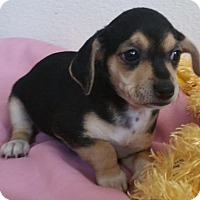 Adopt A Pet :: Baby Girl - Stockton, CA