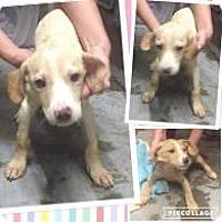 Adopt A Pet :: Dallas - Rexford, NY