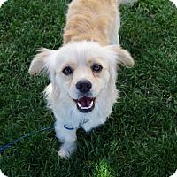 Adopt A Pet :: Disco - Meridian, ID