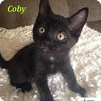 Adopt A Pet :: Coby - Loves to play! - Huntsville, ON