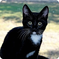 Adopt A Pet :: Roy - Menifee, CA