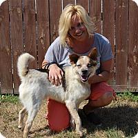 Adopt A Pet :: Twilight - Elyria, OH