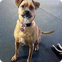 Adopt A Pet :: Lily aka Lady Bug - Grafton, WI