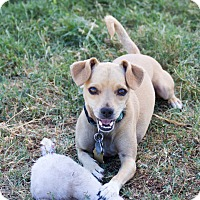Adopt A Pet :: Johnny - Patterson, CA