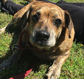 Beagle Mix Dog for adoption in Navarre, Florida - Iris