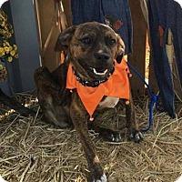 Adopt A Pet :: Gretta - Joliet, IL