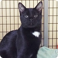 Adopt A Pet :: Micah - Grants Pass, OR