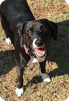 Terrier (Unknown Type, Medium) Mix Dog for adoption in Colmar, Pennsylvania - Willow