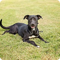 Adopt A Pet :: Harmony - Harrisburg, PA