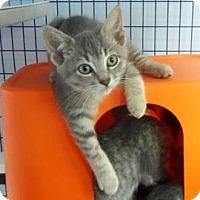 Adopt A Pet :: Aoli - Janesville, WI