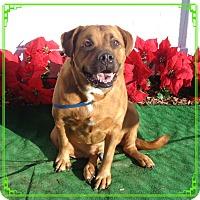 Adopt A Pet :: KASH - Marietta, GA