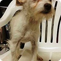 Adopt A Pet :: Frosty - Terrell, TX