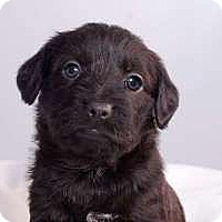 Adopt A Pet :: Pixie - Sudbury, MA