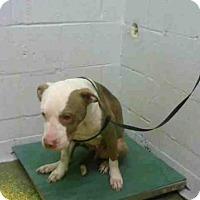 Adopt A Pet :: KELSEY - Atlanta, GA