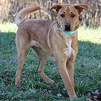 Adopt A Pet :: Pablo - Waldorf, MD