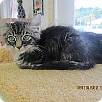 Adopt A Pet :: Rufus - Bunnell, FL