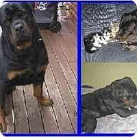 Adopt A Pet :: Rocky - Hamilton, ON