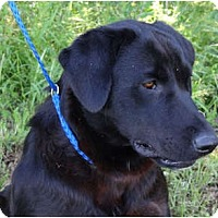 Adopt A Pet :: *Wynona - PENDING - Westport, CT