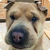 Adopt A Pet :: Truffles - Barnegat Light, NJ
