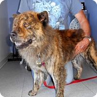 Adopt A Pet :: Coco (Courtesy Listing) - Scottsdale, AZ