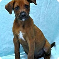 Adopt A Pet :: George 1 in CT - Manchester, CT