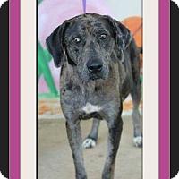 Adopt A Pet :: Mon Cher - bullard, TX