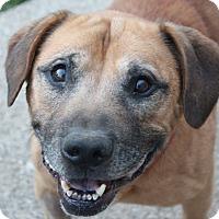 Adopt A Pet :: Stanley - Aurora, IL