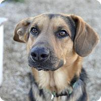 Adopt A Pet :: Kodiak - Meridian, ID