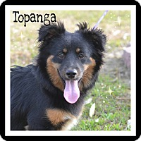 Adopt A Pet :: Topanga - SOUTHINGTON, CT