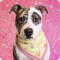 Adopt A Pet :: Roxy - Chico, CA
