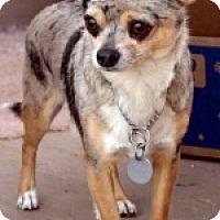 Adopt A Pet :: Zip - Mesa, AZ