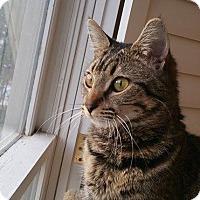Adopt A Pet :: Caspi - Atlanta, GA
