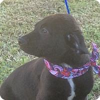 Adopt A Pet :: Ralphie - Buffalo, NY