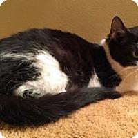 Adopt A Pet :: Loretta - Merrifield, VA