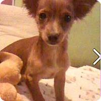 Adopt A Pet :: Peanut - Boulder, CO