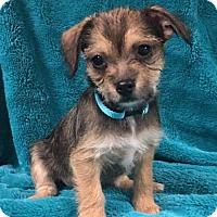Adopt A Pet :: Jerry - Alta Loma, CA