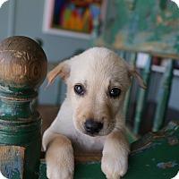 Adopt A Pet :: Draco - San Antonio, TX