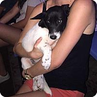 Corgi/Dachshund Mix Dog for adoption in Mesquite, Texas - Milo