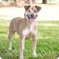 Adopt A Pet :: Lucy Lawless - Houston, TX