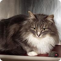 Adopt A Pet :: Isabella - Grants Pass, OR
