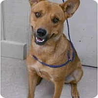 Adopt A Pet :: Pecos Bill-sponsored - Leitchfield, KY