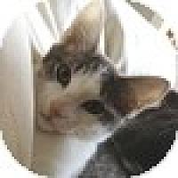 Adopt A Pet :: Livi - Vancouver, BC