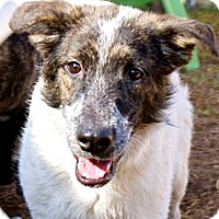 Adopt A Pet :: Spuds - Houston, TX